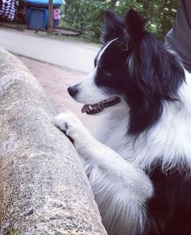 Hoe leer ik mijn hond het opspringen af?