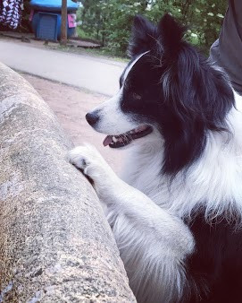 How to stop my dog from jumping at people?