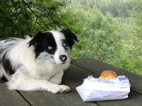 10 human foods that are safe for dogs