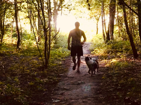 Walking your dog: What? Why? And How?
