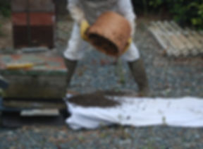 A man putting a swarm of bees from a skep into a hive