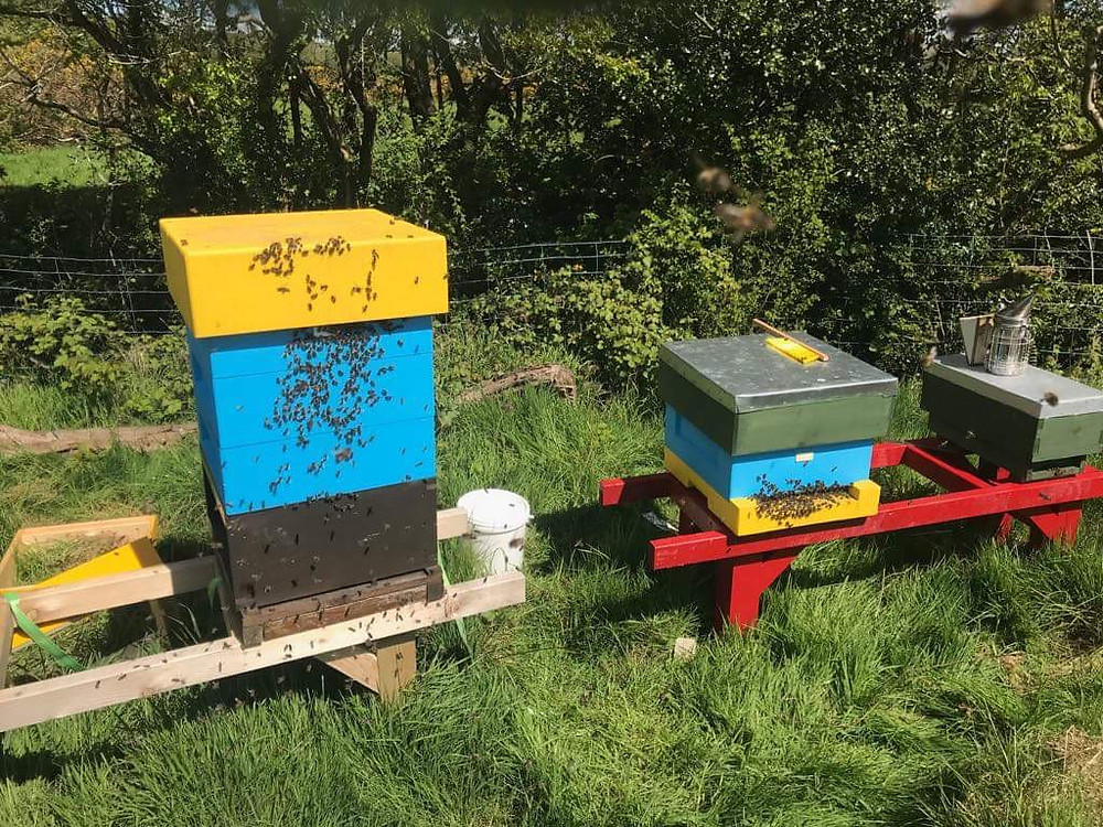 Two painted beehives with lots of bees on the fronts of them