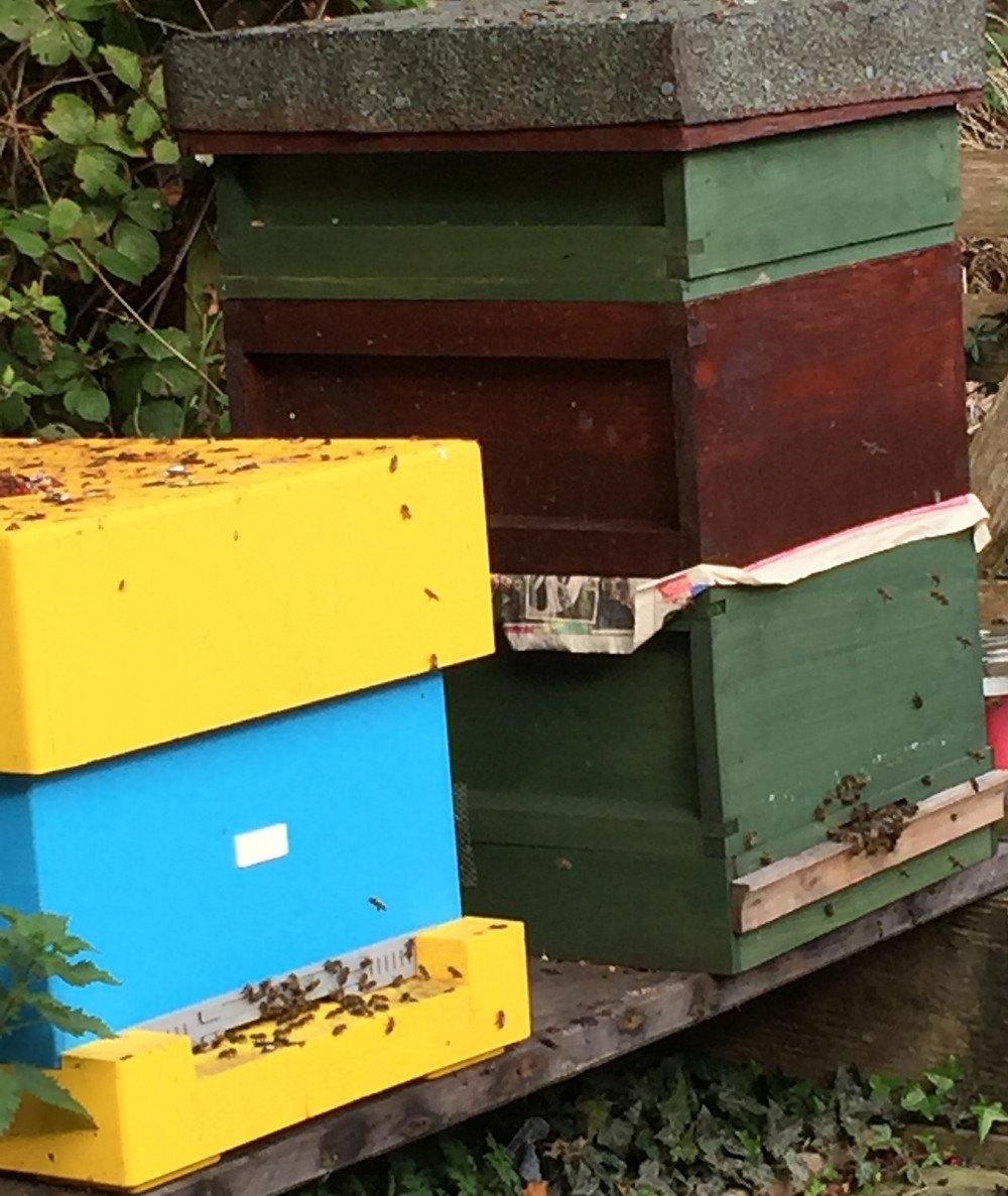 Two beehives, the right hand one with several supers on top