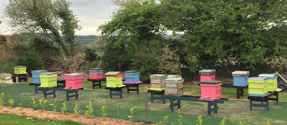 Beginners' Beekeeping Classes 2018