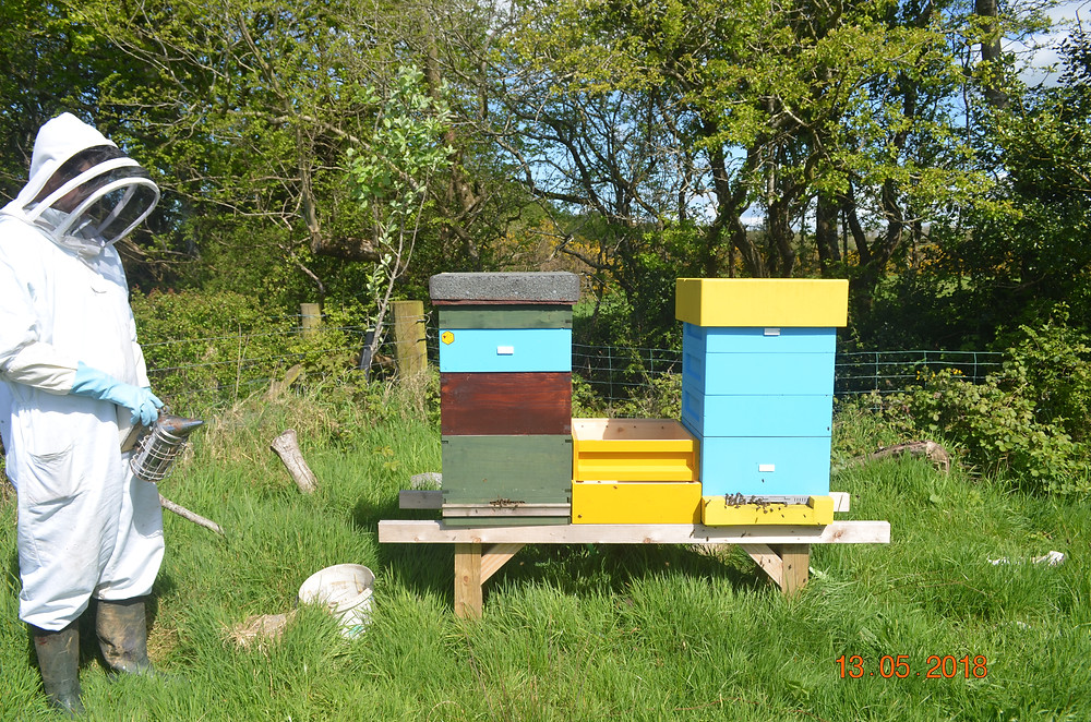 A beekeeper in a beesuit next to two beehives in a field in summer
