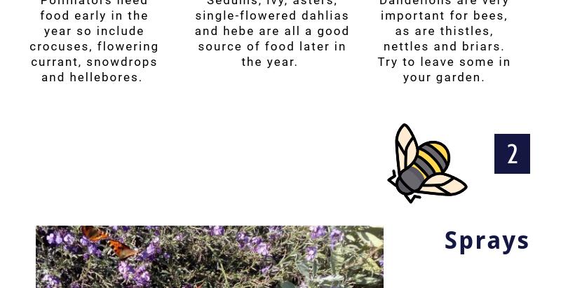 How to create a bee friendly garden