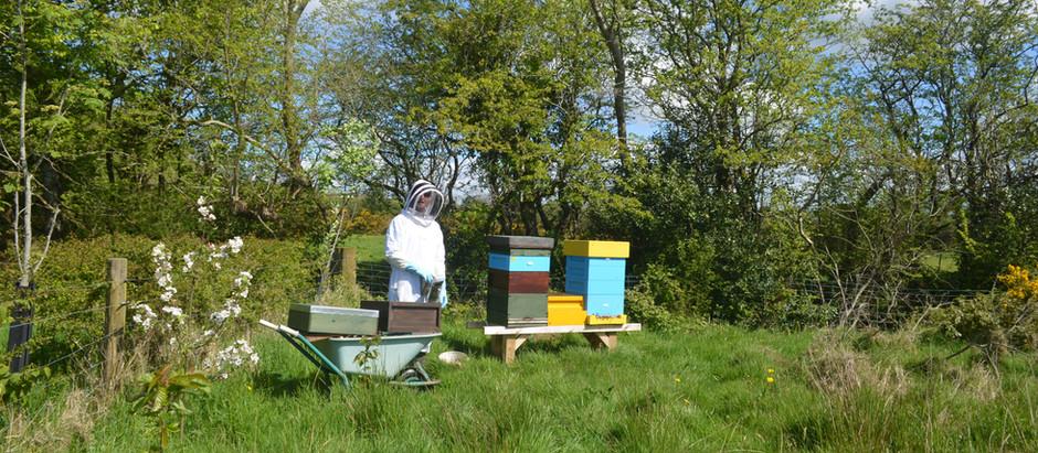 2019 Beginners' Beekeeping Classes