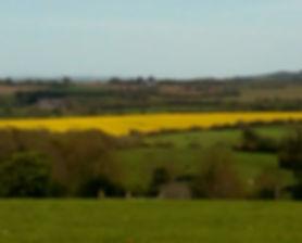 A field of oilseed rape in May.jpg