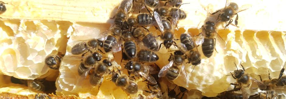 Talk: Varroa Mite Treatments