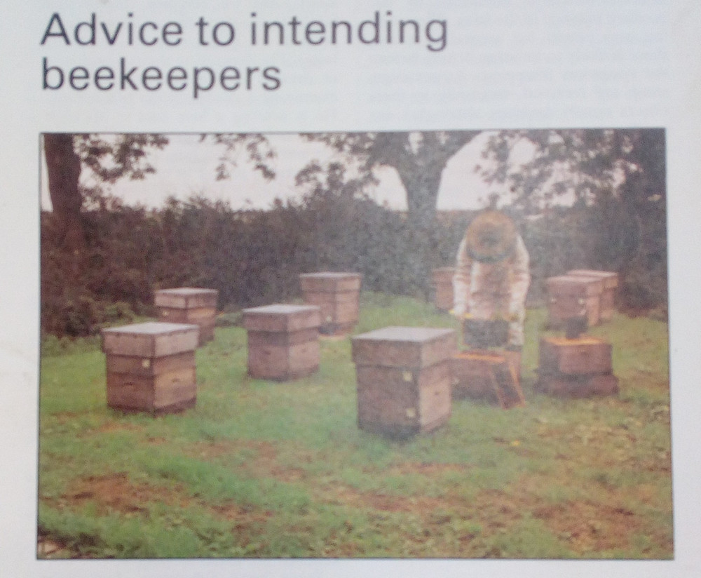 An copy of an old picture of a beekeeper with wooden beehives.