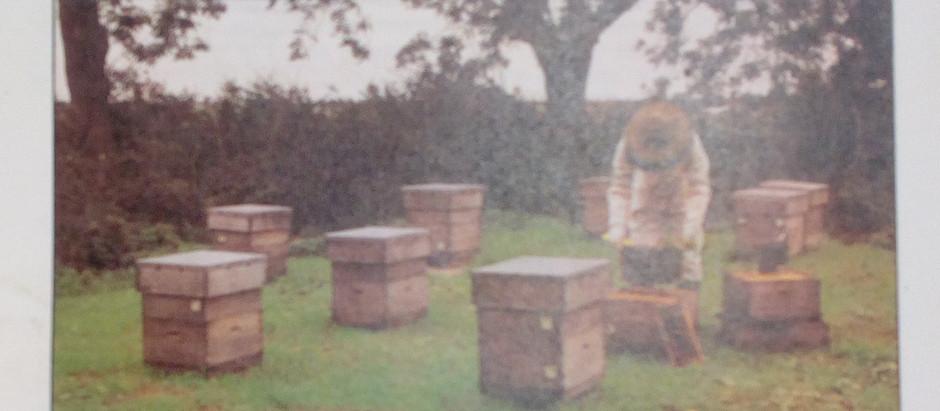 Advice to Intending Beekeepers
