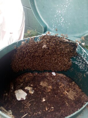 A small swarm of bees in a green compost bin