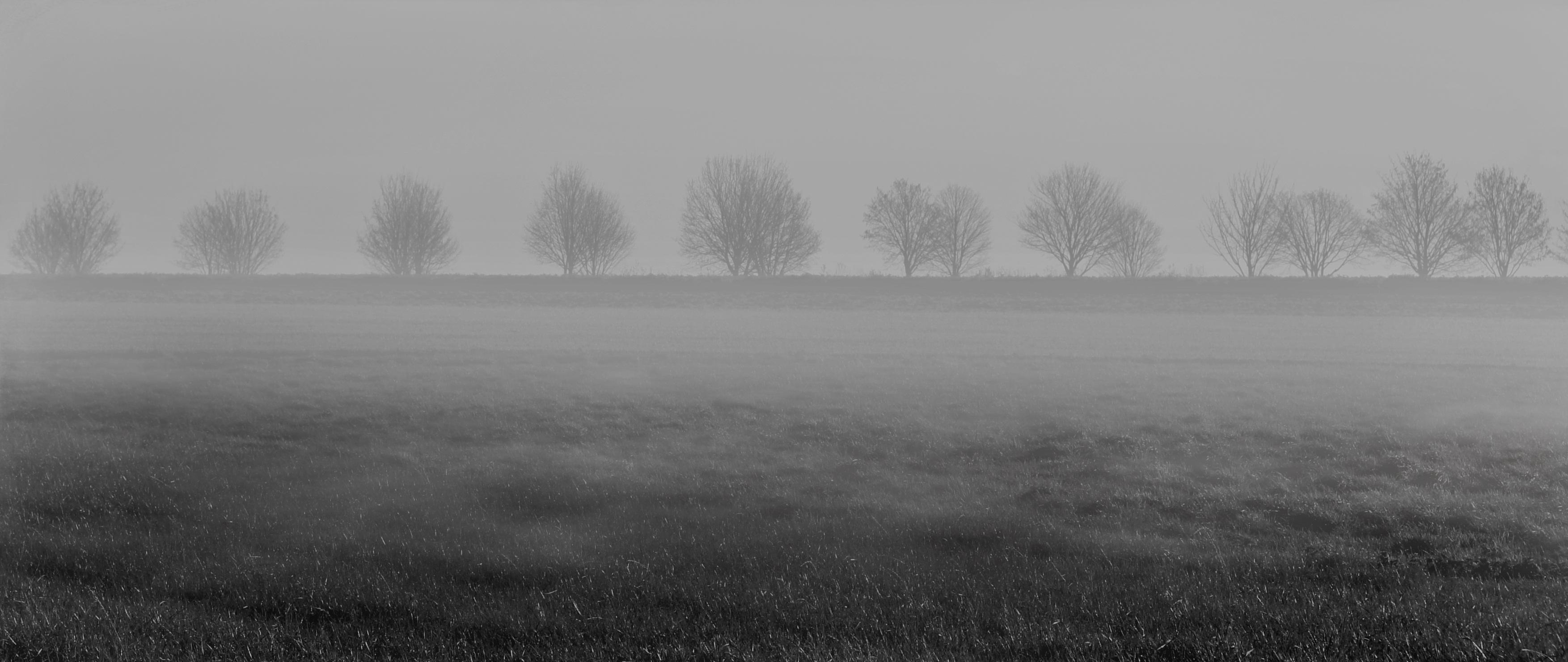 fog-2756456