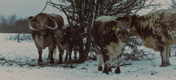 Hatfield Snow 1