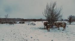 Hatfield Snow 2
