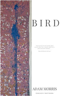 Bird Cover JPG.jpg