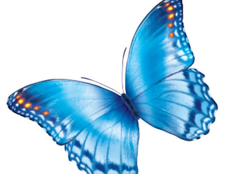 The Butterfly Chronicles: Chapter 6