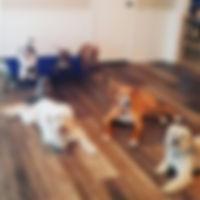 board-train-dogs-1.jpg