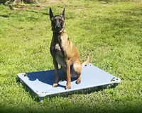 adult-board-and-train-dog.jpg