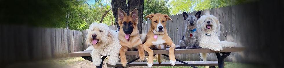 National-Dog-Day.jpg