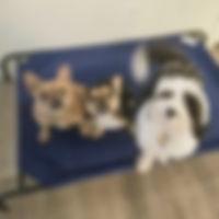 board-train-dogs-3.jpg
