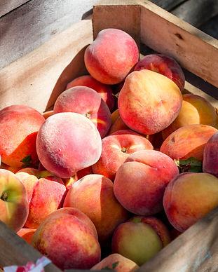 Peaches 4.jpg