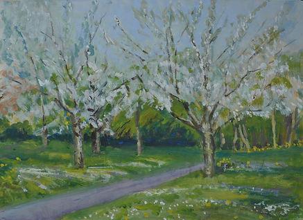 Prunus blossom. Casein Tempera. 38 x 51