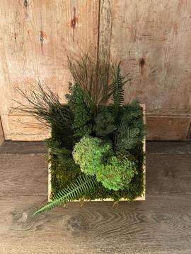 cadre végétal rouen et paris