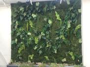Mur végétal entreprise