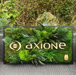 Logos végétaux, Axione