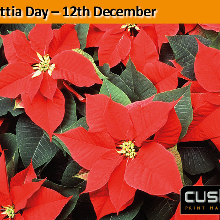 Poinsettia Day – 12th December