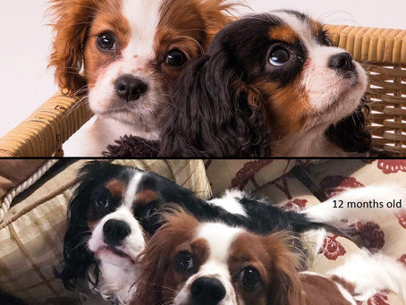 Happy Birthday to the puppies - Harry and Edward – 8th November...