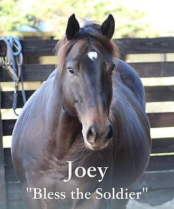 Joey title.jpg