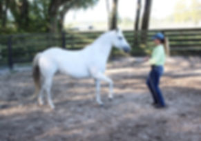 Self Discovery with Horses
