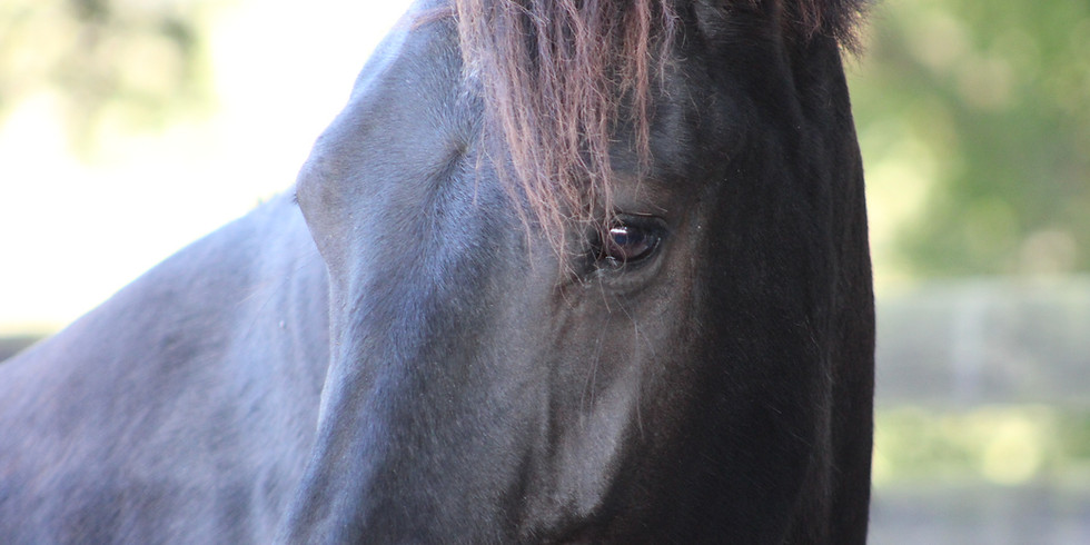3-Day Intuitive Workshop for Women and Horses (October)