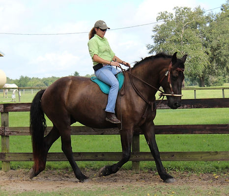 Classical Horsemanship and Classical Dressage
