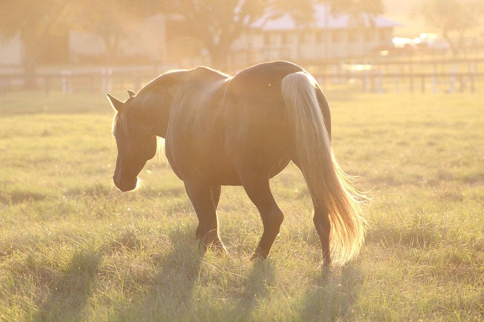 horse-in-pasture.jpg