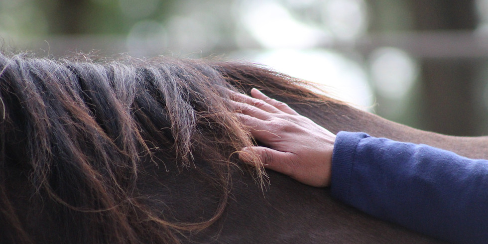 3-Day Intuitive Workshop for Women and Horses