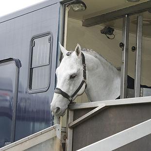 horse-trailer-canstockphoto14350406.jpg