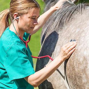 veterinarian-canstockphoto28622522-500w.