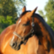 angry-horse-canstockphoto10185814.jpg