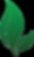 leaf-canstockphoto10691628.png
