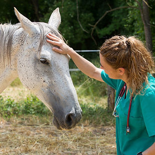 vet-petting-horse-canstockphoto38114054.