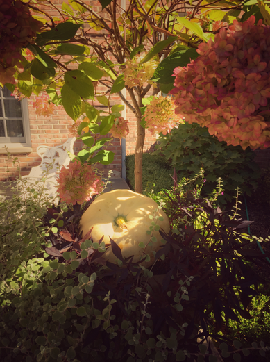 Golden Hour: Fall Decor Edition