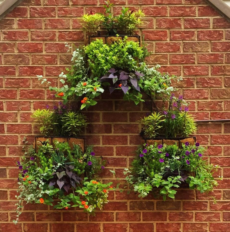 Verticle Garden