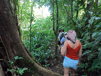 Rainforest Hike 7.JPG