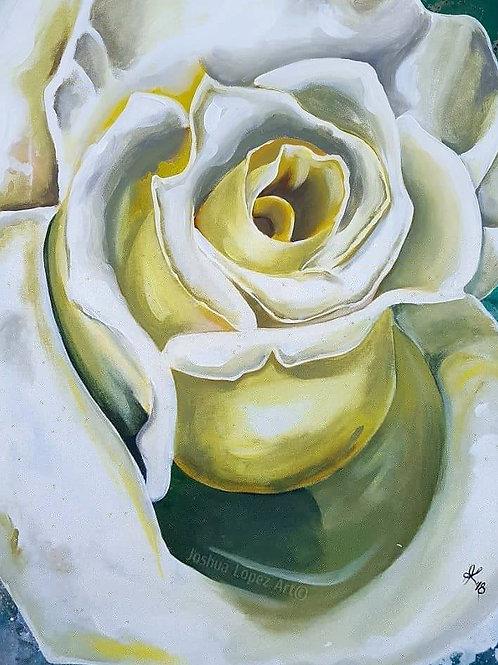 Print - White Rose