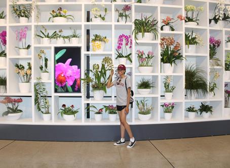 My Favorite Art Museum- The Hirshhorn!