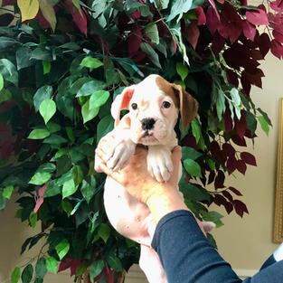 Daisy 8 weeks