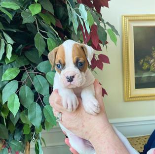 Minnie 4 weeks